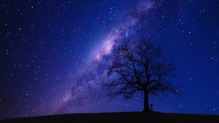 Nighttime galaxy by tree sillouette